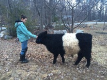 Katelyn with her 2016 steer project, Smudge a Belted Galloway.