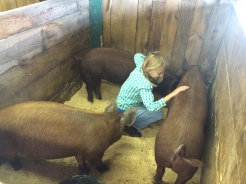 Becca with our 3 young Tamworth gilts. Emma, Norma and Primrose.